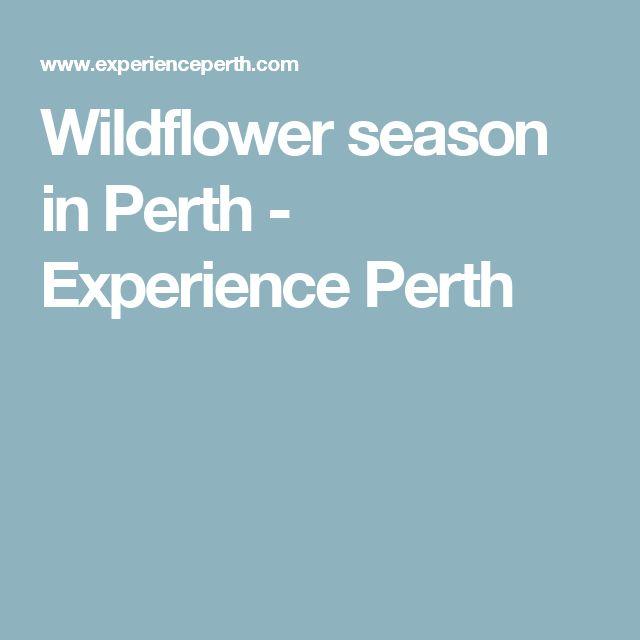 Wildflower season in Perth - Experience Perth