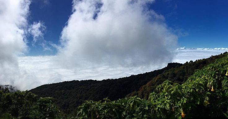 High above the clouds at the top of Doi Inthanon Thailand's highest mountain  Thanks @voyagin for an amazing tour of the national park! #travel #thailand #chiangmai #doiinthanon #exploreasia #thailandshighestpeak