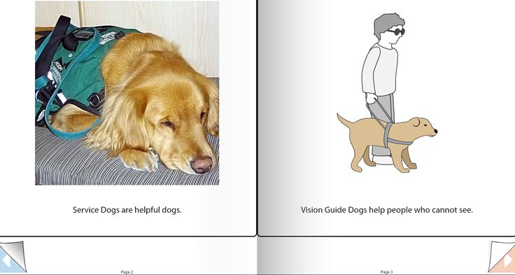How Effective Are Service Dogs For Austism