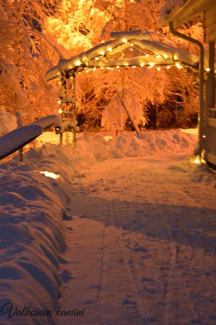 Valkoinen Kaniini: Winter wonderland