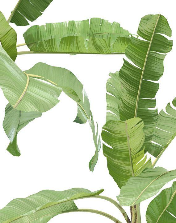Las 25 mejores ideas sobre plantas de banano en pinterest for Banano de jardin