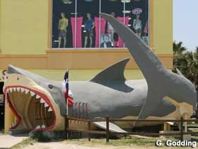 The shark that ate us hahaha Seaside Shark, Corpus Christi
