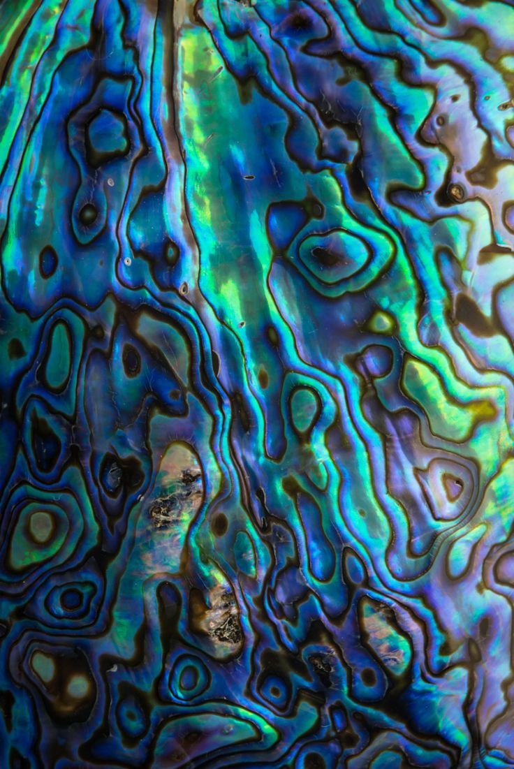 Paua Shell is related to the Abalone Shell. It is found around New Zealand.
