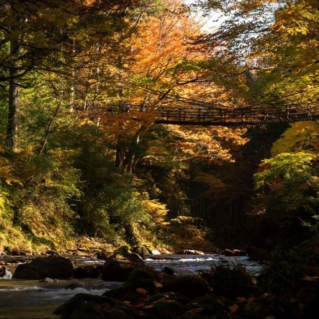 【torunara_fukui】さんのInstagramをピンしています。 《池田渓流散策 #pentax #pentaxk1 #autumn #river #forest #outdoor #fukui #ikeda #池田町 #かずら橋 #渓流 #川 #森 #秋 #紅葉 #ペンタックス #福井》