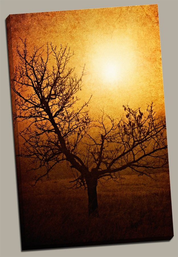 """Brotherhood of Light"" www.romansolarphotography.com"