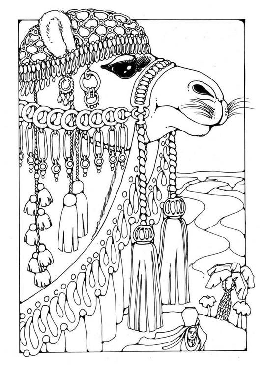 Coloring page Camel - coloring picture Camel. Free coloring sheets to print and download. Images for schools and education - teaching materials. Img 18445.: