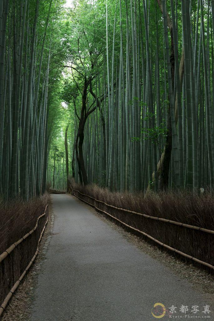 季節が変わっても碧い森へ 【嵐山・竹林の道】