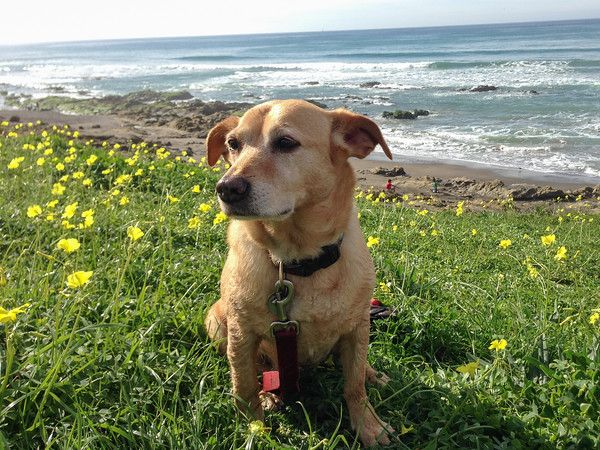 Dog Friendly Hotels Morro Bay