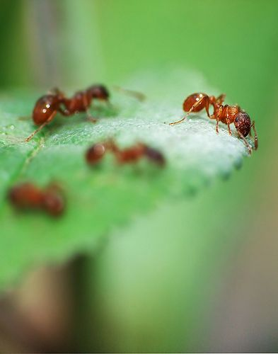 89 Best Images About Ant Colony On Pinterest