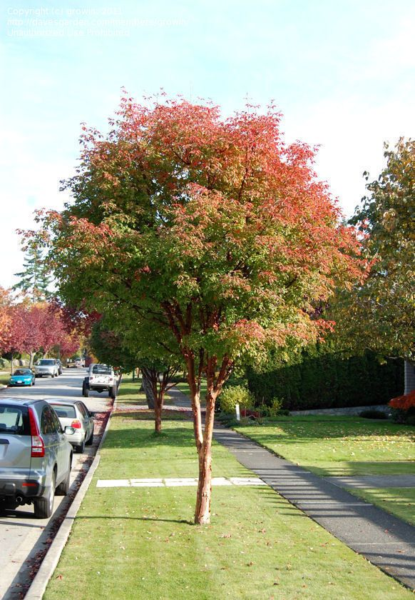 tree park maple - photo #25