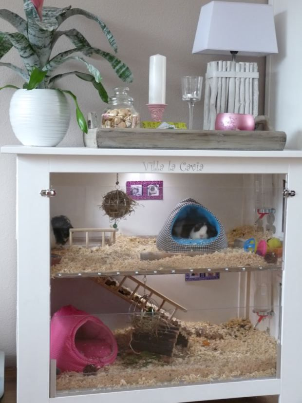Guinea pig cage from repurposed dresser                                                                                                                                                                                 More