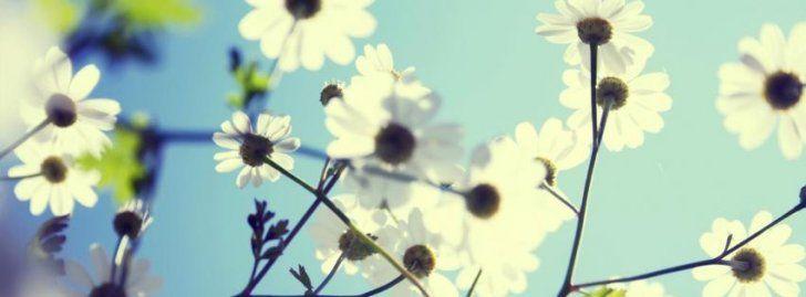 campo de flores vintage - Google Search