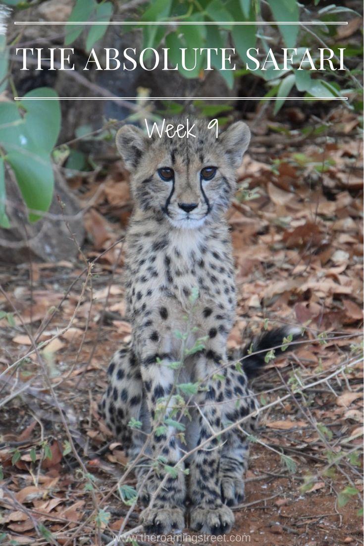 The Absolute Safari Week 9: Namibia - The Roaming Street