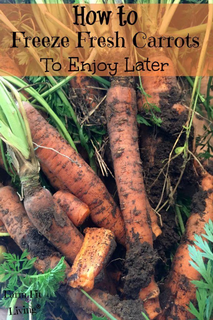 Freeze Fresh Carrots | Preserving Food | How to Freeze Carrots