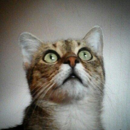 Grigore the cat..