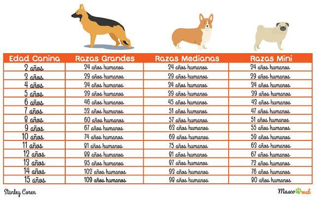 ¿Qué edad humana tiene tu perro? Hasta ahora muchos pensábamos que podíamossaber la edad de nuestro perromultiplicando su edad por 7. Así un perro de 2 años tenía unos 14 años enedad humana, sin embargo, habían cosas que no cuadraban y es que según esa regla de cálculo losperrospodían tener crías con 7 años de...