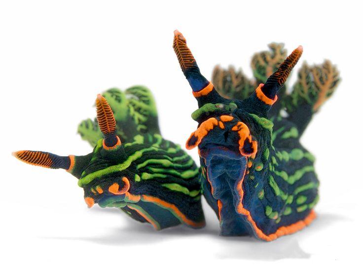 The Slug Species Nembrotha kubaryana