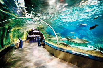 Istanbul Aquarium and Aqua Florya Independent Shopping Trip