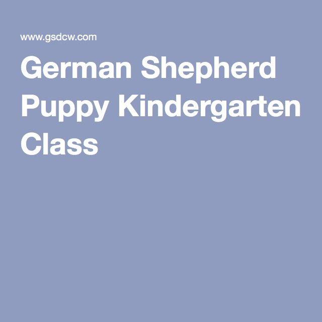 German Shepherd Puppy Kindergarten Class