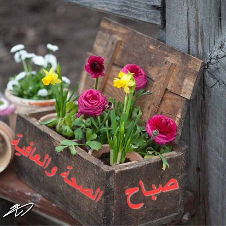 اللهم رب الناس اذهب البأس اشف أنت الشافي لا شفاء إلا شفاؤك شفاء لا يغادر سقما صباح الخير والصحة Garden Containers Flower Pots Garden Inspiration