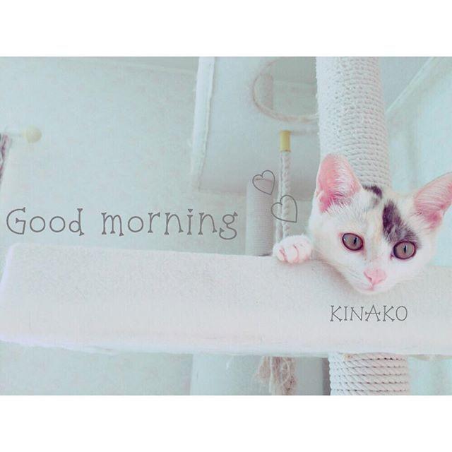 . #きなこあんころもち#きなこ #愛猫#猫#三毛猫#ミケ#love . この写真ちょうど1年前くらいの。 まだ顔が幼い可愛い。 . 猫って可愛い。 . #instapet#instacat#pet#cat#🐱
