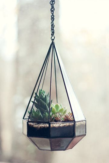 terrarium.  Geometric and a little industrial. My kind of terrarium.   Indoor Succulent Gardens for Any Home | Apartment Therapy