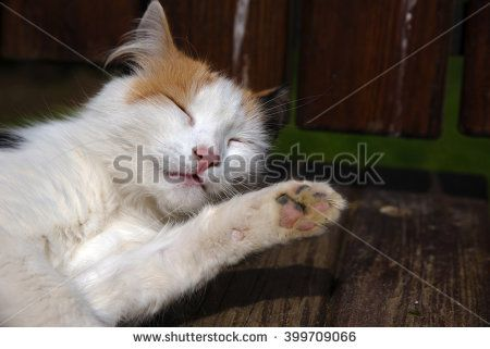 Cute White Cat Laying Down on A Bench and Looking So Sleepy