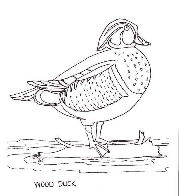Collection Of Duck Coloring Pages For Kids In 2020 Dinosaur