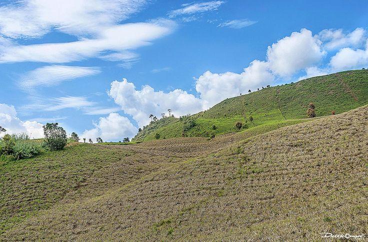Perkebunan teh - Solok - Sumatera Barat