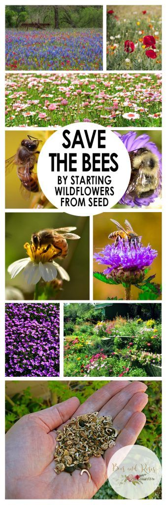Save The Bees By Starting Wildflowers from Seed| How to Grow Wildflowers, Growing Wildflowers, Gardening, Gardening Tips and Tricks, Wildflower Care Tips, Save The Bees, Ways to Save the Bees, Easy Ways to Save the Bees, Flower Gardening, Flowers, Garden, Popular Pin