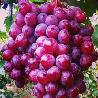 InstaSocial: #20pcs #semi di ##uva rossa globo #giardino dolce  1... (link: http://ift.tt/2hbI59h )