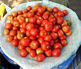 Tomatoes, tomatoes, tomatoes...