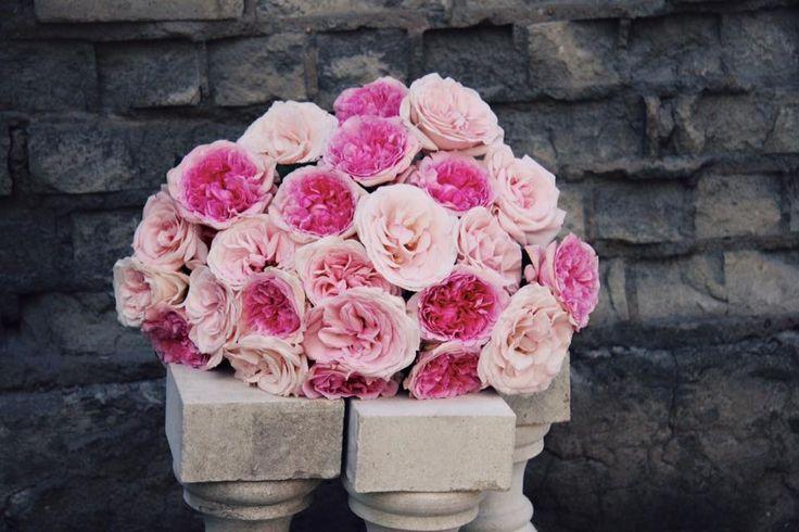 """Пастельный микс от """"Фея розы""""   #феярозы #feyarozy #flowers #rozblog #садовыерозы #французскиерозы #цветы #душистыерозы #ароматныерозы #доставкацветовмосква #флористпитер #российскоепроизводство #доставкацветов #необычныебукеты #букет #букетназаказ #флористика #vscoflowers #flowerstagram #красивыйбукет #эксклюзивныебукеты #пастельныймиксфеярозы"""