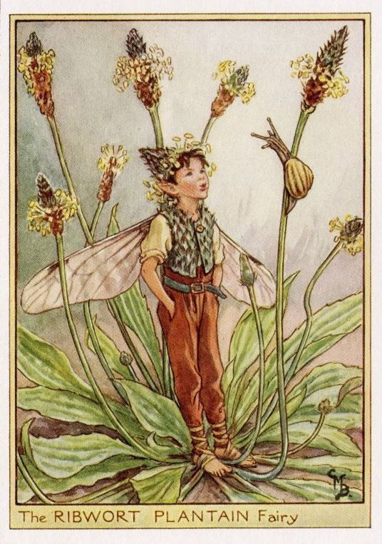 Smalle weegbree Flower Fairy Vintage Print, c.1950 Cicely Mary Barker-boekillustratie plaat