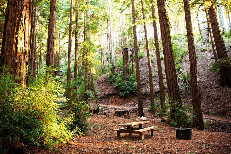 Ventana Campground Campsite In The Redwood Forest With