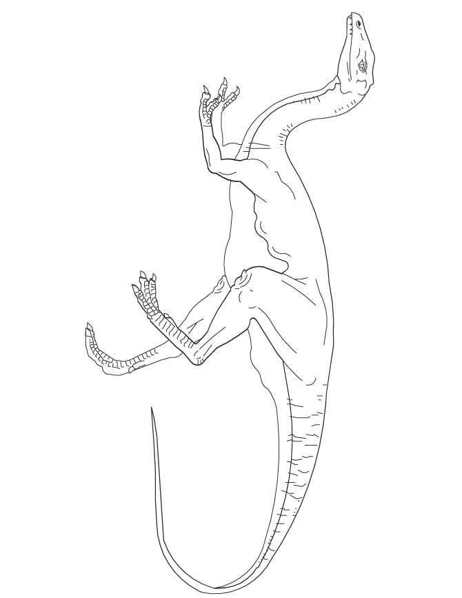 Awesome Gallimimus Dinosaur Coloring Page See More Coloring Pages Compilation For Kids And Dinosaur Coloring Pages Dinosaur Coloring Dinosaur Coloring Sheets