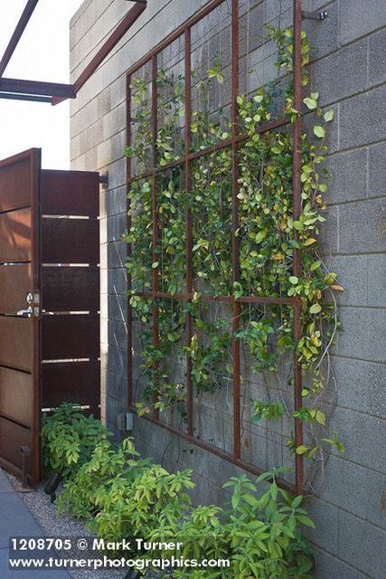 Best 25 Vine trellis ideas only on Pinterest Plant trellis