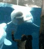 Wanna Mess With Me, Little Punk!  I Love this whale, he makes happy :)