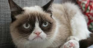 Image result for grumpy cat