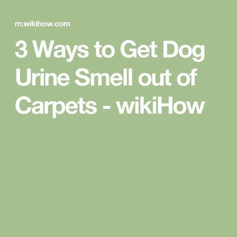 25 Best Ideas About Urine Smells On Pinterest Dog Urine