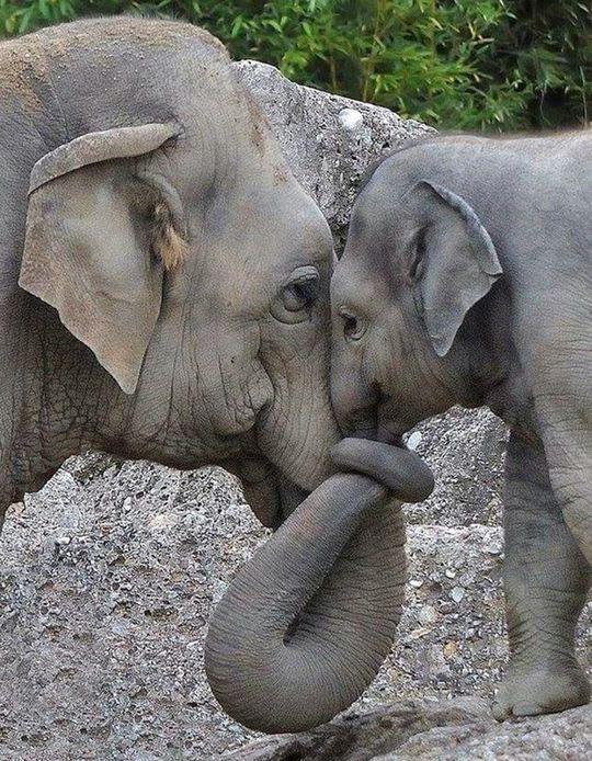 """♔ Elephants ~ """"Life is Beautiful"""" photo"""