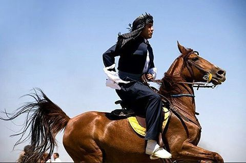 Kurdish Man from Iran on Horseback. The great Kurdish Horse from the Province of Kirmaşan in western Iran with a known history stretching back thousands of years, is one of the oldest purest breeds today. This beautiful Horse was and is a constant companion of the Kurdish Tribes.