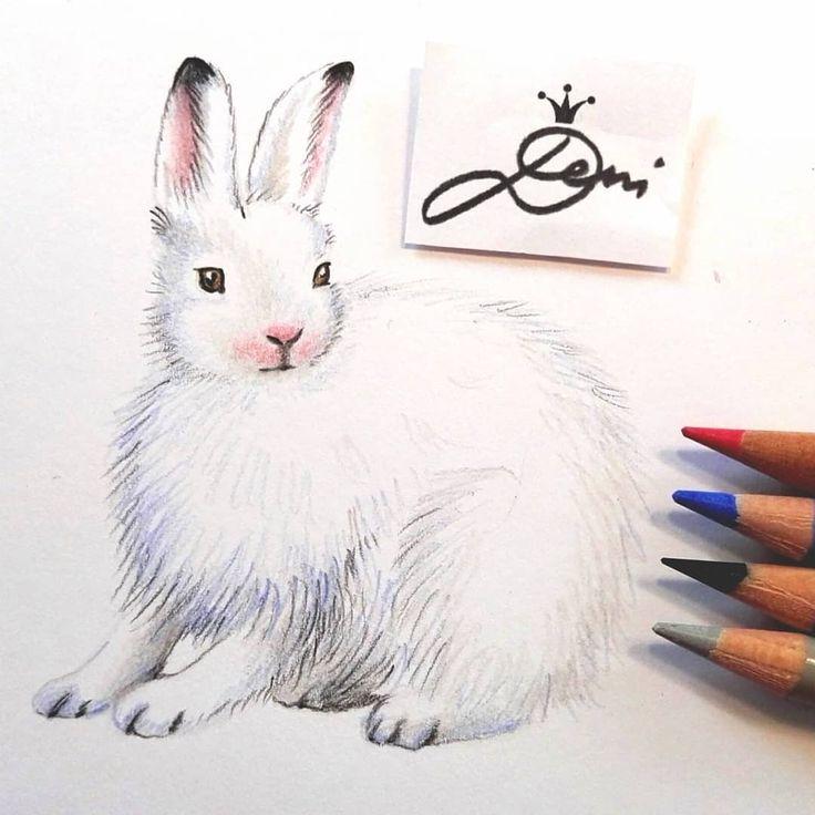 20 besten ganz einfach tiere zeichnen lernen bilder auf pinterest - Hase zeichnen ...