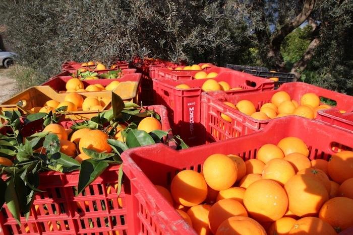 Le nostre arance siciliane.
