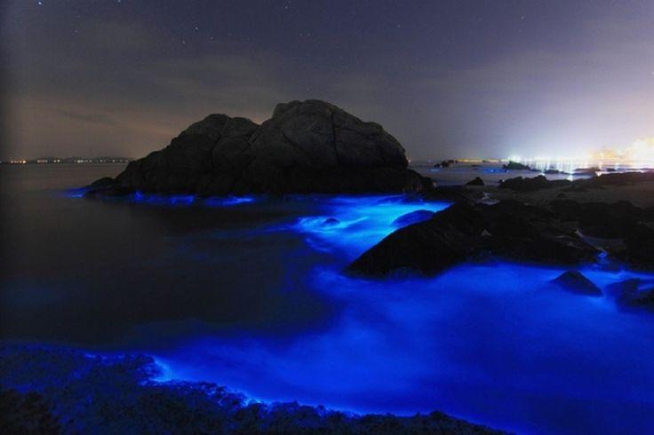 思わずため息が…三河湾の夜光虫が生み出す神秘的なスカイブルーの波