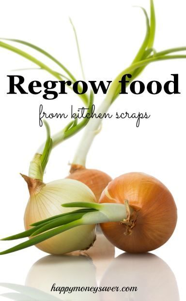 How to Regrow Food from Kitchen Scraps ~ I never realized how much money I was wasting when I could have been regrowing my food at home including onions, potatoes, herbs, garlic and ginger.