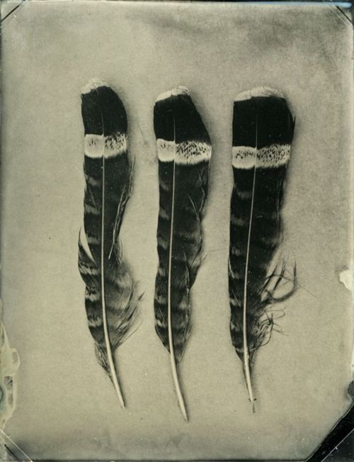 feather by feather