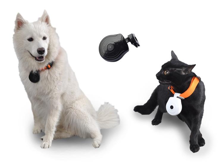กล องส ตว เล ยง Pet Camera ต ดตามส น ข แมว ท แสนร ก อ นๆ Http Www Tarad Com Product 4725352 Scid Mi P Ideecraft 080812 C Pet Camera Pet Collars Pet Cam