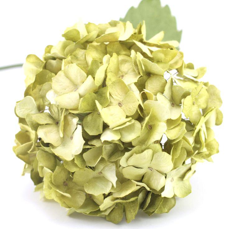 Paper Hydrangeas- Lemon Green – Paper Flowers Australia