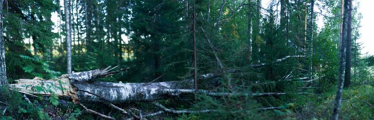 Ripped - 2010 #tree ...